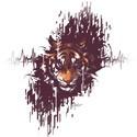 Enter the Tiger