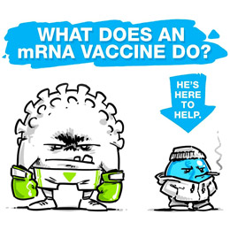 What does an mRNA vaccine do?